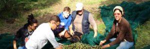 The family who runs the olive farm