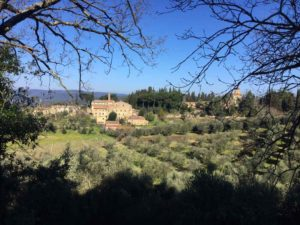 The medieval village of Montepescini surrounded by olive trees