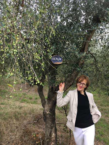 Adopt a Tuscan olive tree