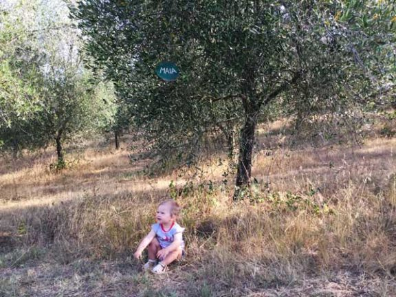 Crowdfarming is a way to help direct producers and olive farming.